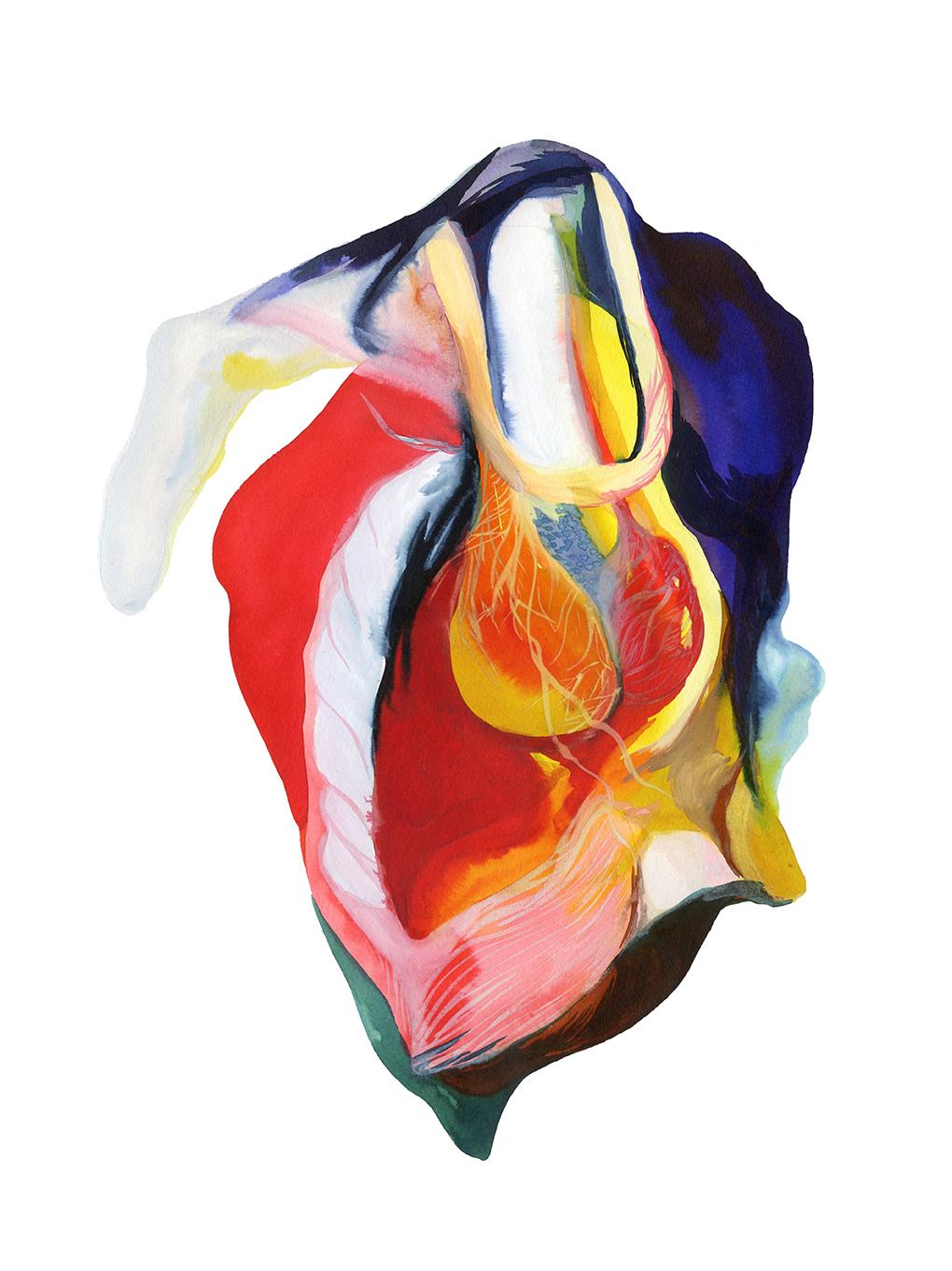 Louise Duneton illustration anatomie