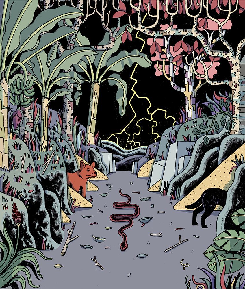 Pierre Ferrero illustration jungle Colombie serpent